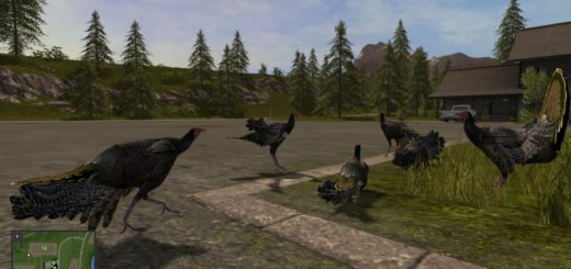Мод индейки FS17 TURKEYS Farming Simulator 17