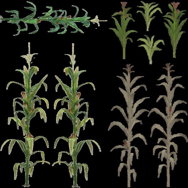 Текстуры Corn Texture V 1.17 Farming Simulator 17